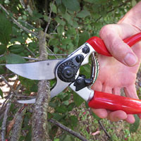 Secateurs / Pruners